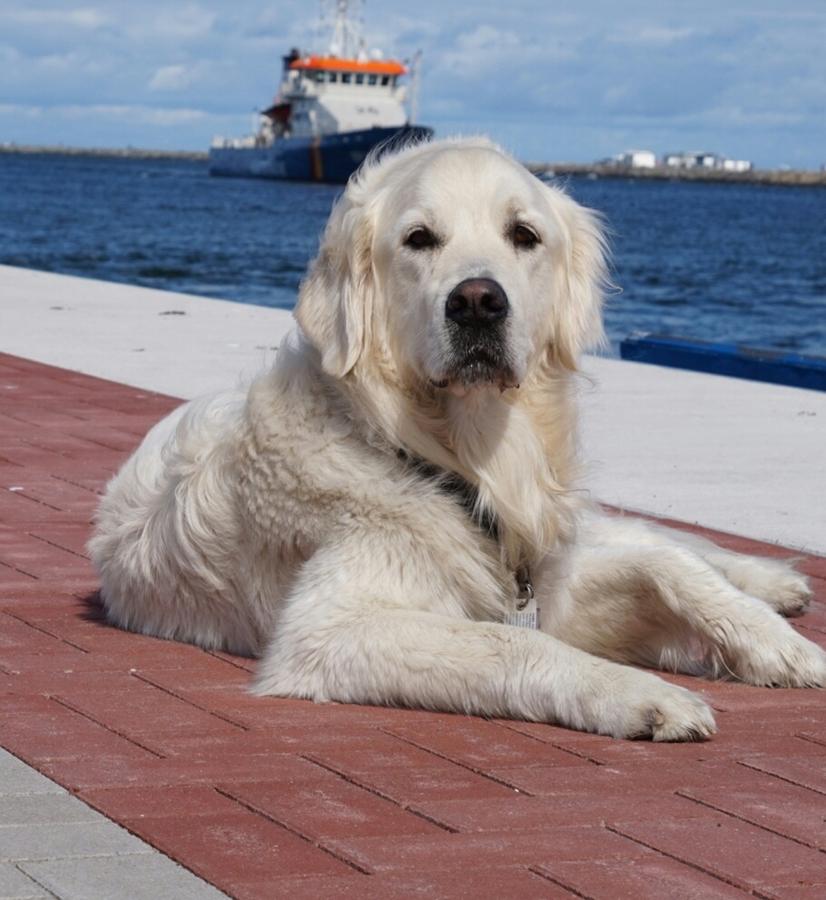 entspannter hund zu hause